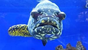 So cool! Hello Mr. Fish.